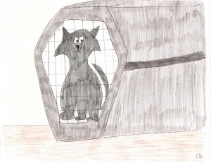Boris in the Cat Carrier
